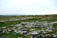 Kalksten den Burren nationalparken, Irland Royaltyfri Bild