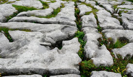 Kalksten den Burren nationalparken, Irland Arkivfoton