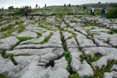 Kalksten den Burren nationalparken, Irland Royaltyfria Bilder