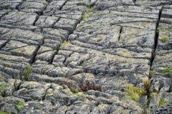 Kalkstentrottoar ovanför malhamlilla viken yorkshire UK arkivbilder