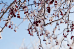 kall dagvinter Arkivfoto
