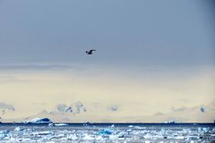 Kall fågel Arkivfoton