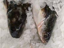 kall fisk Arkivbild