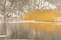 kall flod Arkivbild