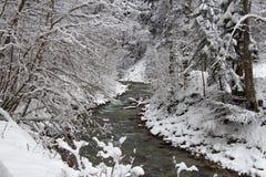 Kall flod mellan träd i vintertid Garmisch-Partenkirchen germany Royaltyfri Fotografi