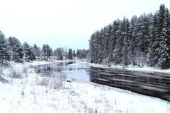 Kall gran för snö för vinterskoglandskap Royaltyfri Fotografi