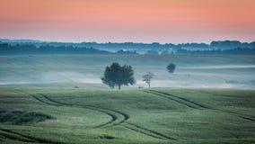Kall gryning på det dimmiga gröna fältet i sommar, Polen royaltyfri bild