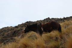 kall häst Arkivfoto