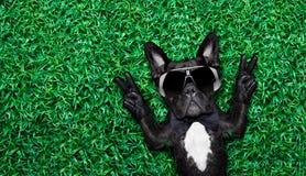 kall hund Arkivfoto