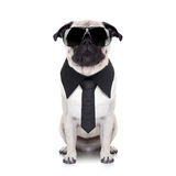 kall hund royaltyfri fotografi
