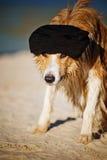 Kall hund i ett lock på stranden Arkivbild