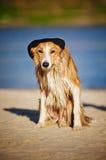 Kall hund i ett lock på stranden Royaltyfri Foto