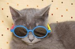Kall katt med solglasögon Fotografering för Bildbyråer