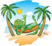 Kall leguan som tycker om ferier i en hängmatta på stranden Arkivbilder