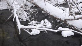 Kall liten vikvår, kusten som täckas med snö, och is, stupade träd i vattnet, snönedgångarna i skogen lager videofilmer