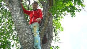 Kall man i rött sammanträde på ett träd stock video
