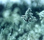 kall minttree Arkivbild