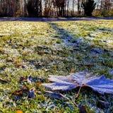 Kall morgon i Bryssel Royaltyfria Bilder