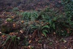 Kall morgon i en dimmig skog i nedgången arkivfoton