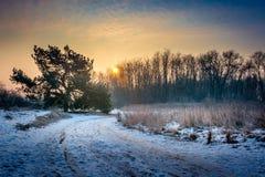kall morgonvinter Royaltyfria Bilder
