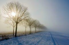 Kall och dimmig rak lantlig väg med silhouettes av trees royaltyfri bild