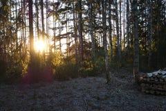 kall skog Royaltyfri Bild