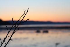 Kall solnedgång i vår nära Trondheimsfjorden Royaltyfria Bilder