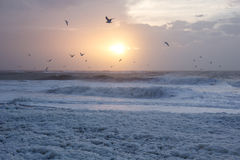 Kall solnedgång på stranden med havsskum och fåglar, Thisted, Danmark royaltyfri foto