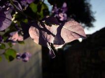 kall stor vinter för väder för naturväxttrees Royaltyfria Bilder