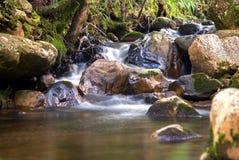 Kall ström av vatten och ett damm royaltyfri fotografi