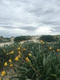 Kall strand Arkivbild