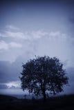 kall tree Fotografering för Bildbyråer