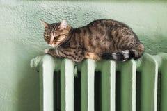 kall vinter Problem med uppvärmning Kattuppvärmning på batteriet Strimmig kattkatt som kopplar av på ett varmt element Den härlig royaltyfria bilder