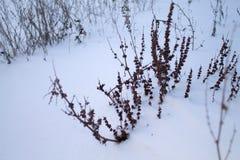 Kall vinter som snöar dag Arkivfoton