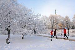 Kall vinterdag i parkera Royaltyfri Foto