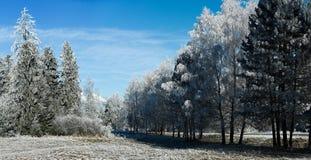 Kall vinterdag, rimfrost och rimfrost på träd Royaltyfria Bilder