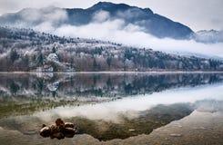 Kall vintermorgon på Bohinj sjön i den Triglav nationalparken Arkivbild