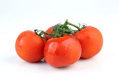 Kalla nya tomater på vit bakgrund Fotografering för Bildbyråer