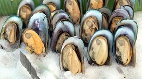Kalla Nya Zeeland musslor Royaltyfri Bild