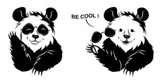 Kalla Panda Draws Off Glasses Royaltyfri Fotografi