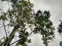 Kalla trädhimmelgrå färger arkivfoton