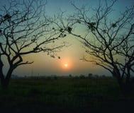 kalla trees för lakemorgonsoluppgång Royaltyfri Bild