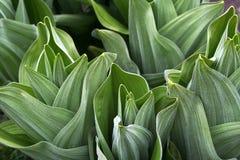 kalla växter Arkivbild