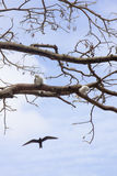 Kallad havsfågel Royaltyfria Foton