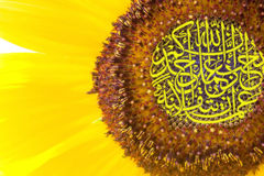 Kalligraphie auf Sonnenblume stockbild