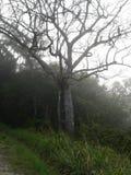 Kallt brasilianskt träd Royaltyfria Bilder