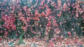 Kallt och rött Fotografering för Bildbyråer