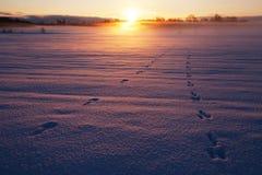 Kallt väder i Estland Arkivbilder