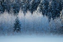 Kallt väder i Estland Arkivbild