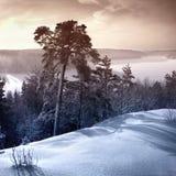 kallt winterday Royaltyfri Foto